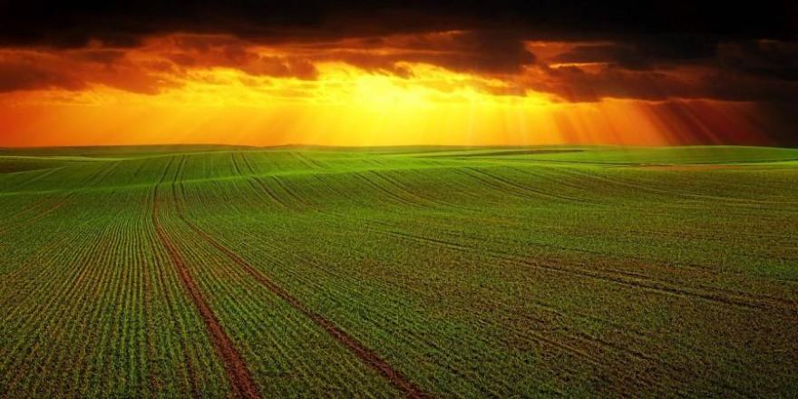 Seit 2005 stieg der Preis für Ackerland um 193 Prozent auf durchschnittlich 25.485 Euro pro Hektar (Foto: Johannes Plenio)