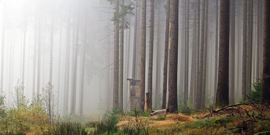Hochsitz im Wald bei Nebel (Beispielbild: rihaj)