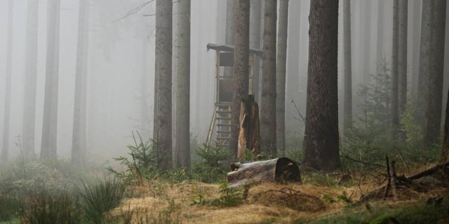 Ein von einem Hochsitz gefallener Jäger wurde von der Feuerwehr aus dem Wald geborgen (Beispielbild: rihaij)