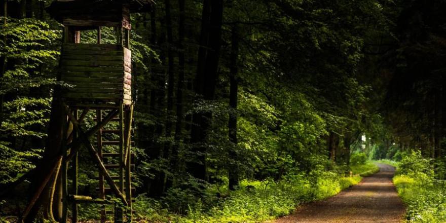Ein Hochsitz an einem Waldweg (Symbolbild: Michael Horstendahl)