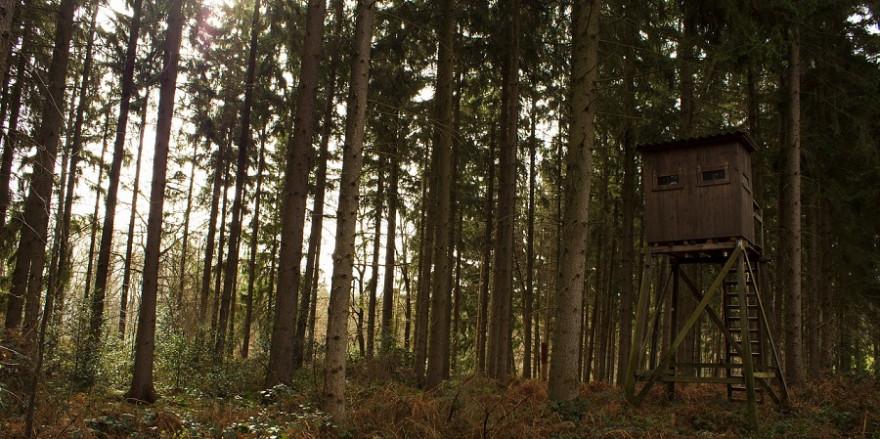 Ein Hochsitz im Wald.
