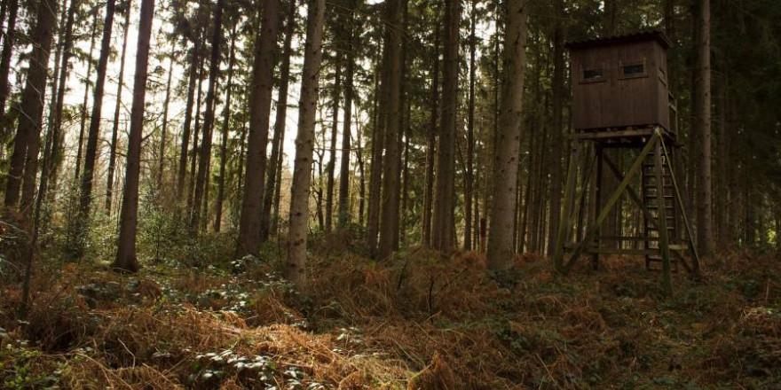Hochsitz im Wald (Beispielbild: Pascal Treichler)