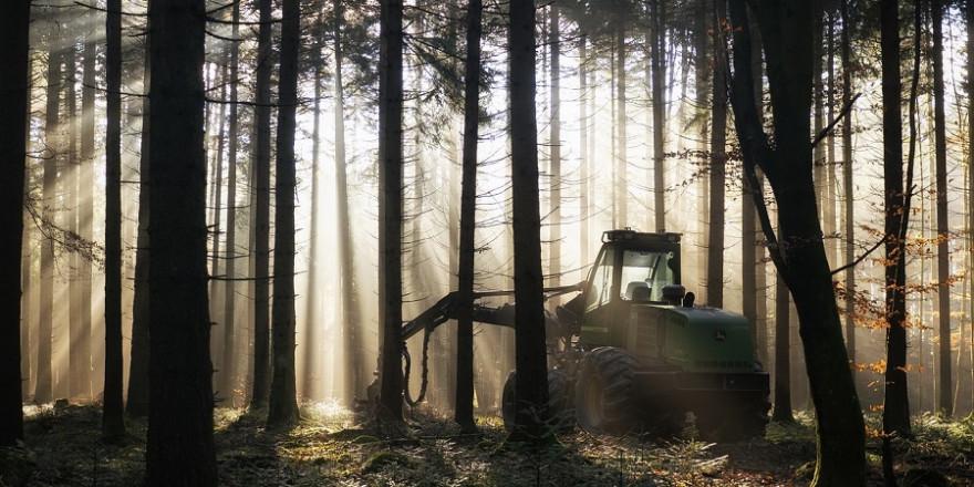 Harvester im Wald