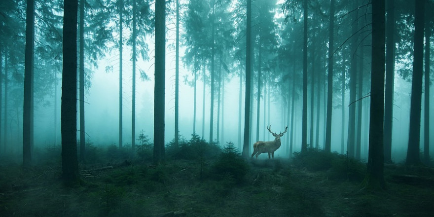 Rothirsch im Wald bei morgendlichem Nebel
