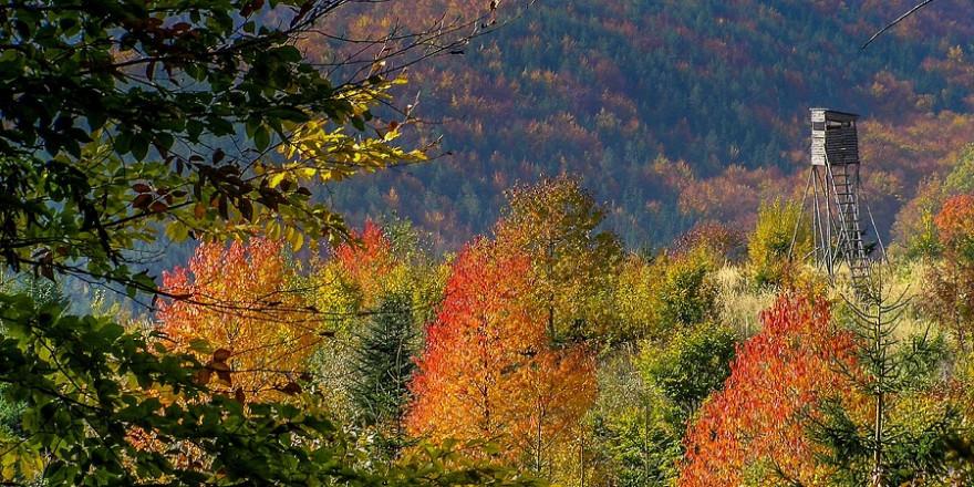 Hochsitz im herbstlichen Wald (Foto: Cydonia)
