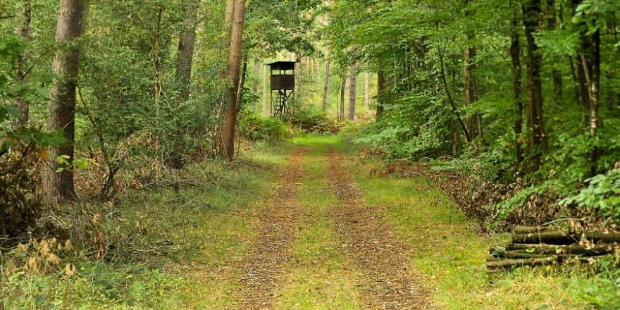 Wege sind nichts anderes als lange Lichtschneisen im Wald und je breiter und je weniger befestigt sie sind und befahren werden desto attraktiver sind sie fürs Wild. (Beispielbild: Tobheg)
