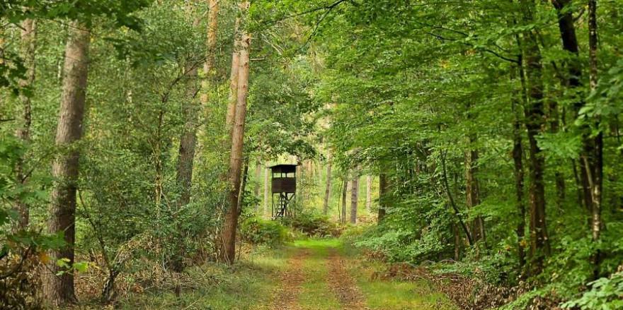 Ein Hochsitz im Wald (Symbolbild: Tobheg)