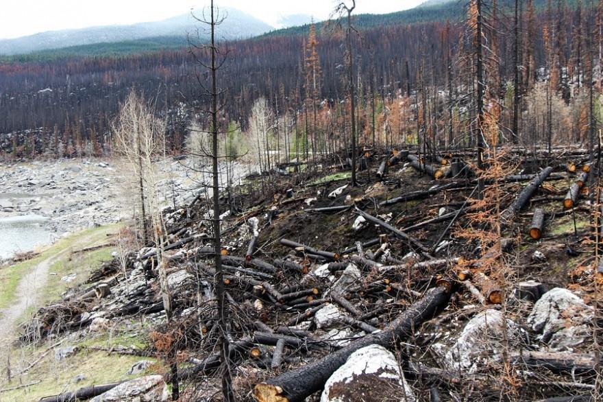 Waldbrandfläche