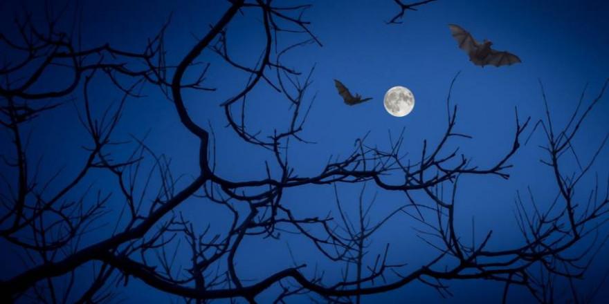 Fledermäuse über einem Baum bei Vollmond (Symbolbild: Angeles Balaguer)