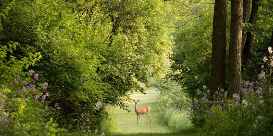 Schalenwild im Fokus: Bleiben am Ende Wald und Wild auf der Strecke? (Symbolbild: StockSnap)