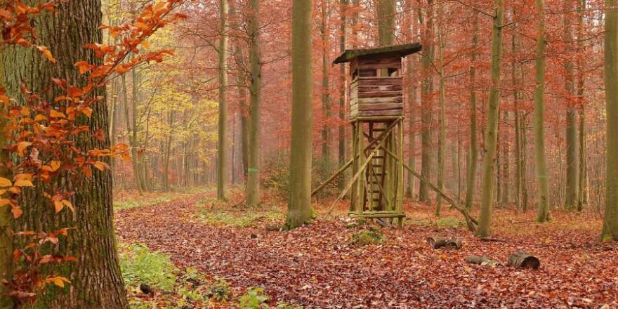 Hochsitz im Herbstwald (Symbolbild: pictavio)