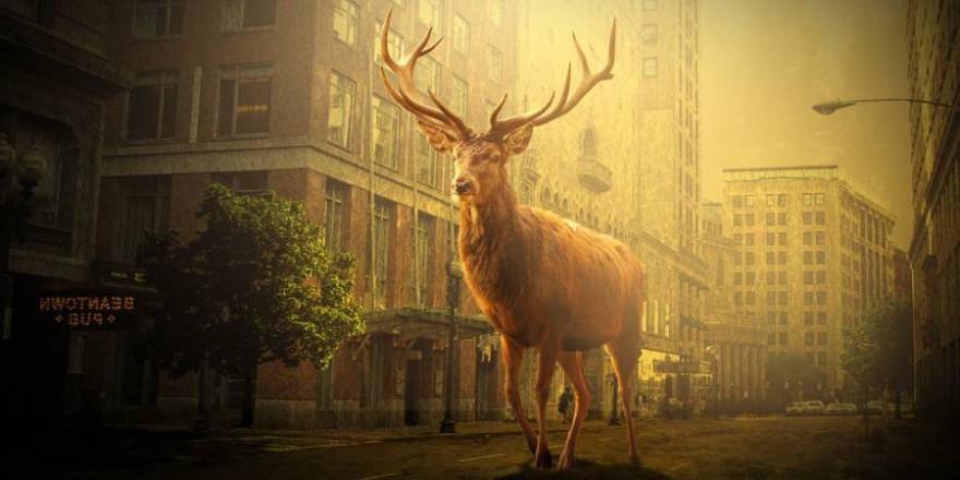 Der Hirsch musste erlegt werden, um von ihm ausgehende Gefahren abzuwenden (Symbolbild: Christine Engelhardt)