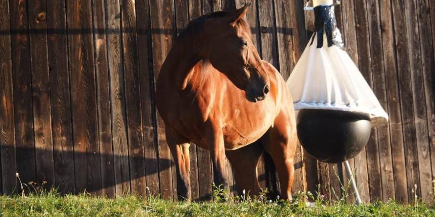 Das Pferd wurde auf einem Reiterhof von einem Unbekannten verletzt (Symbolbild: Ratfink1973)