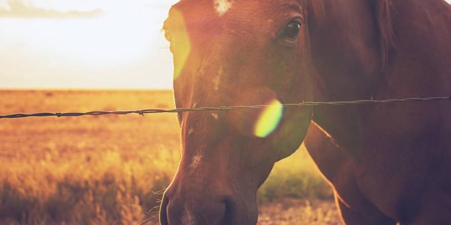 Pferd hinter einem Stacheldrahtzaun (Symbolbild: Joshua Woroniecki)