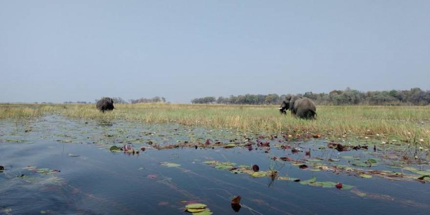 Elefanten am Okavango-Delta (Beispielbild: hayden134)