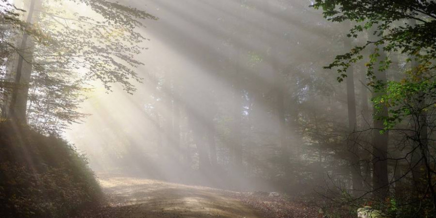 Wald im Morgenlicht (Foto: Couleur)