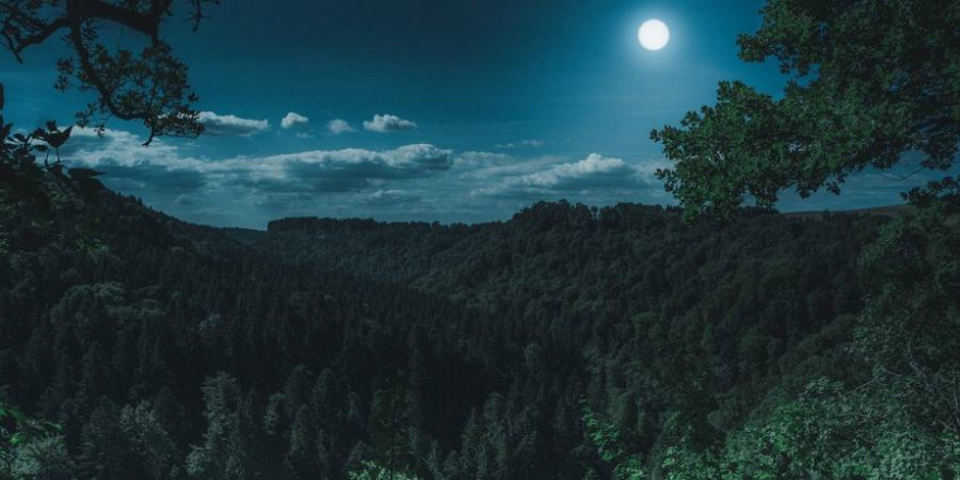 Wald bei Vollmond (Foto: Florian Kurz)