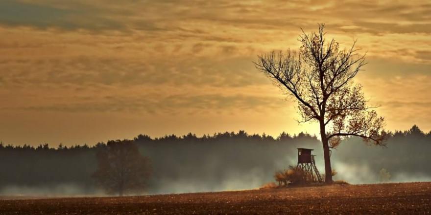 Ein Hochsitz neben einem baum auf einem Feld (Symbolbild: Peggychoucair)