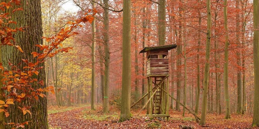 Hochsitz im Herbstwald.