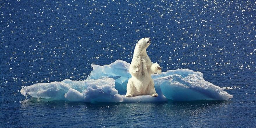 Eisbär auf einer kleinen Eisscholle.