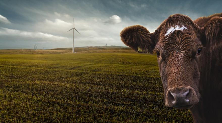 Energie und Landwirtschaft sind neben dem Verkehr zwei Schwerpunktthemen der Studie