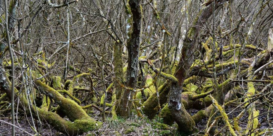 Im dichten Unterholz festsitzend, konnte sich der ältere Mann alleine nicht aus seiner misslichen Lage befreien. (Symbolbild: Manfred Antranias Zimmer)