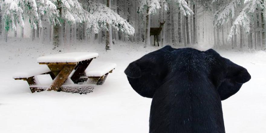 Ein Hund beobachtet ein Stück Wild in winterlicher Landschaft (Symbolbild: Schwoaze)