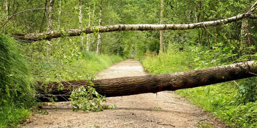 Zwei umgestürzte Bäume versperren einen Waldweg (Symbolbild: Manfred Antranias Zimmer)