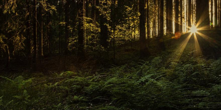 Morgens im Wald (Symbolbild: mila-del-monte)