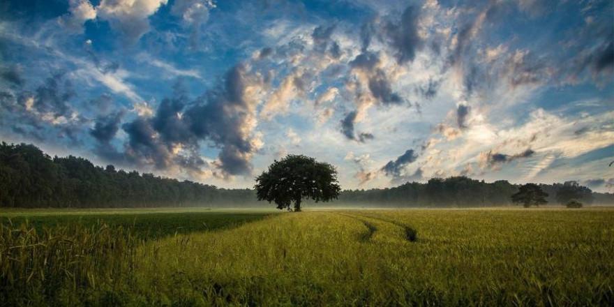 Felder mit einzelnen Bäumen unter bewölktem Himmel (Symbolbild: JuergenPM)