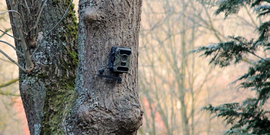 Der Jäger hatte in seinem Revier mehrere Wildkameras montiert. (Beispielbild: Harry Stueber)