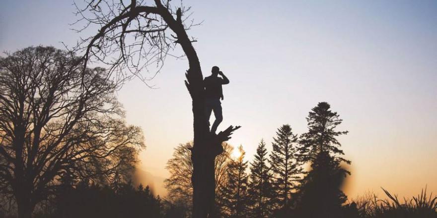 Aus Panik vor einem Schwarzkittel flüchtete der Fahrradfahrer auf einen Baum (Beispielbild: StockSnap)