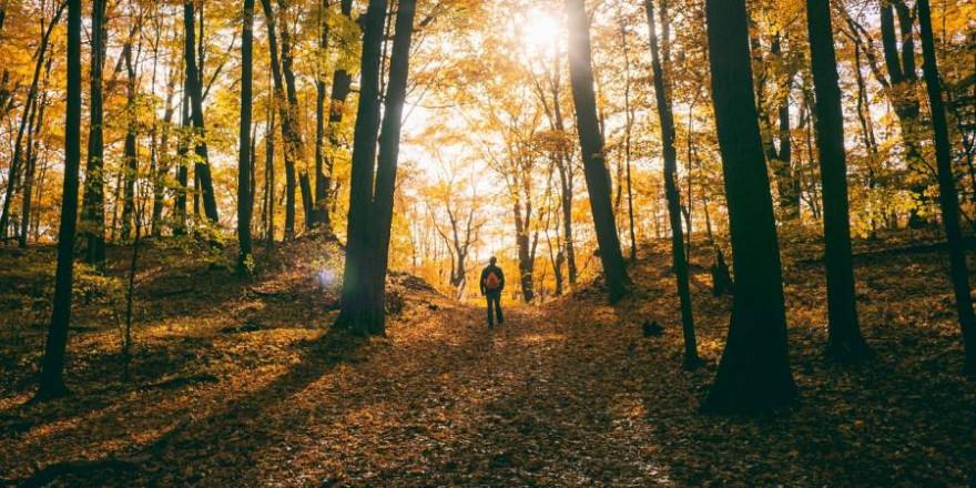 Ein Mann im herbstlichen Wald (Symbolbild: StockSnap)
