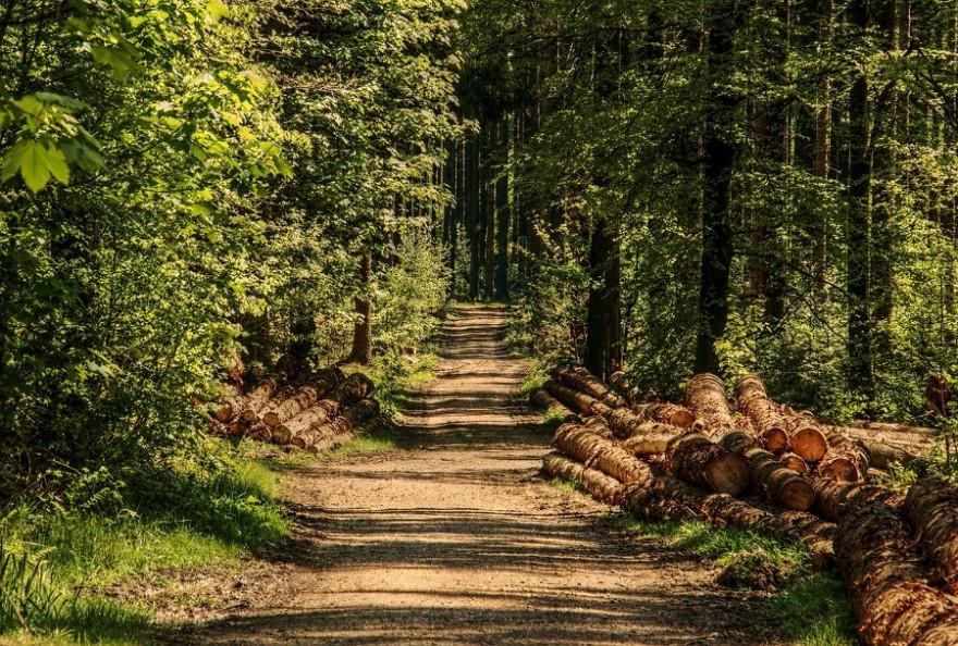 Schadholz im Wald