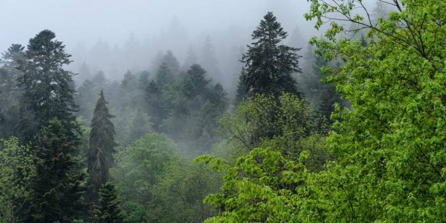 Impression aus dem Schwarzwald (Symbolbild: Marvin Haselbach)