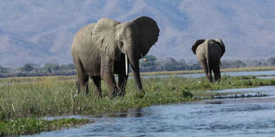 Wilde Elefanten (Foto: skeeze)