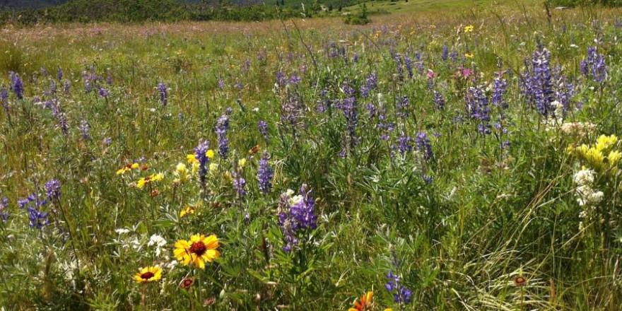 Wildblumen (Beispielbild: kag523)