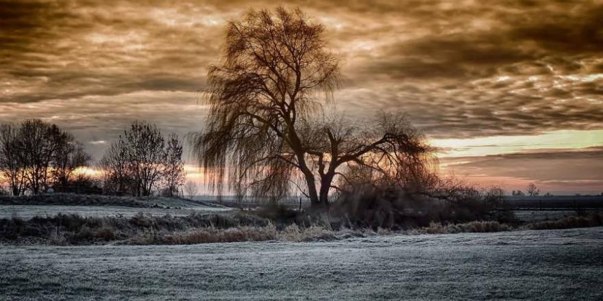 Weide im Winter (Foto: Hans Benn)