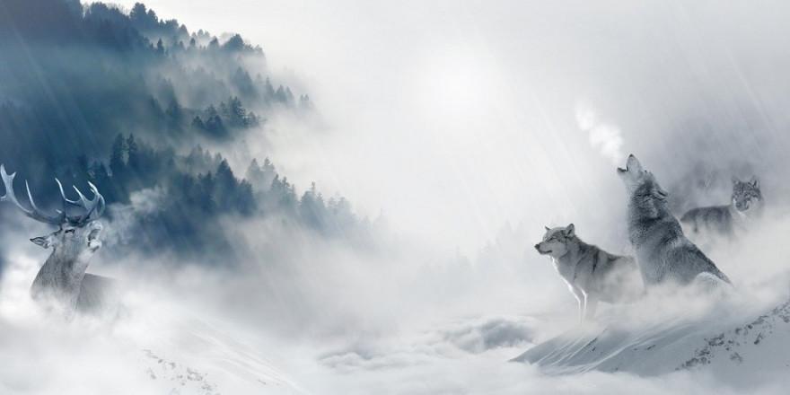 Gibt es wildlebende Tiere erster und zweiter Klasse?