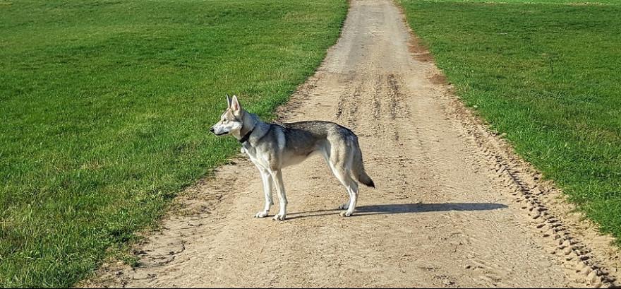 Ein Hund auf einem Feldweg.
