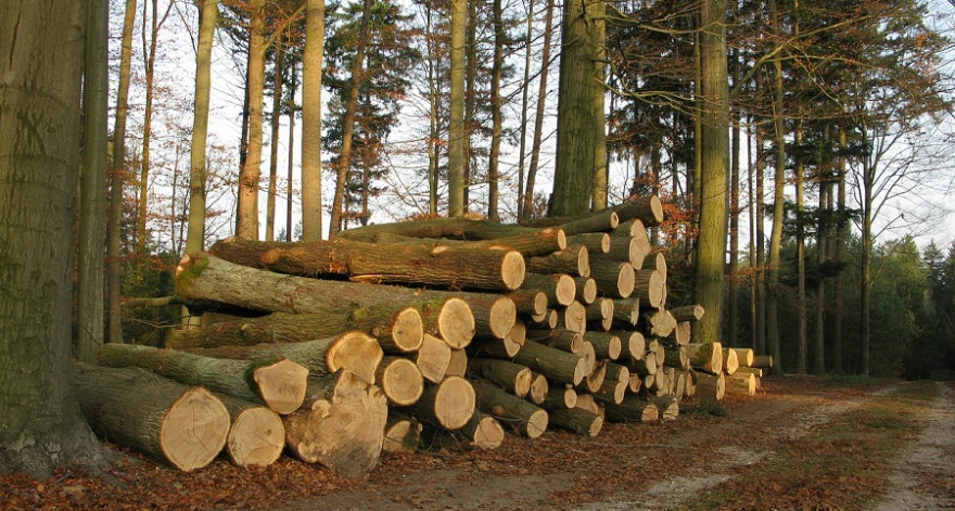 Eichenholzpolter im Herbstwald