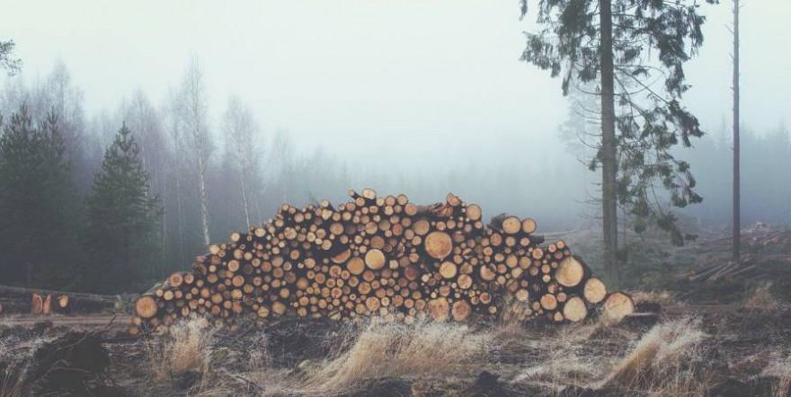 Gepoltertes Holz auf einer Kahlschlagfläche (Symbolbild: Free-Photos)