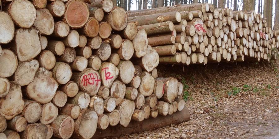 Gepoltertes Holz (Symbolbild: Garak01)