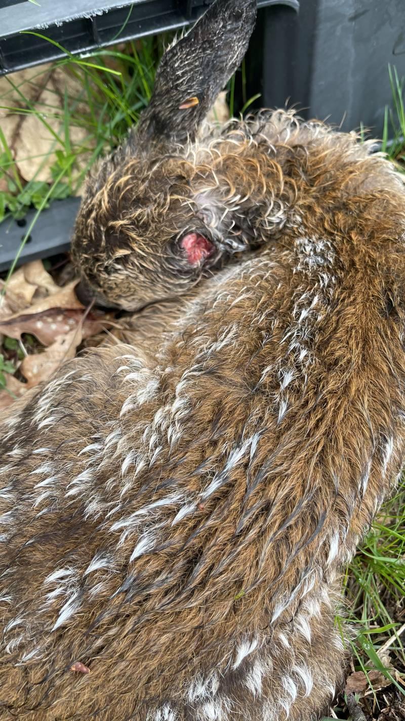 Das verletzt aufgefundene Rehkitz (Foto: Polizei)