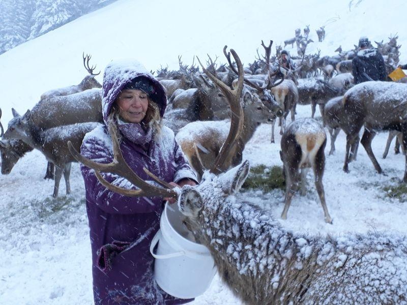 Gemeinsam mit Jägern kümmert sich Tessy Lödermann auch um die Fütterung des Schalenwildes in winterlichen Notzeiten.