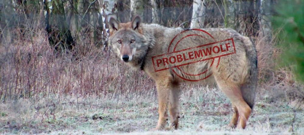 Problemwolf