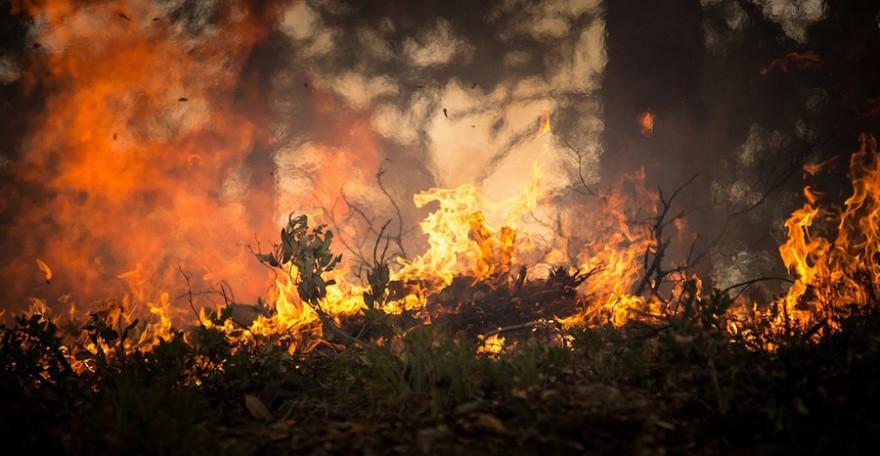 Ein Waldbrand wütet
