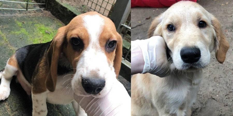Diese Hundewelpen wurden im September in einem Hinterhof in Buchholz aufgefunden. (Fotos: Polizei)