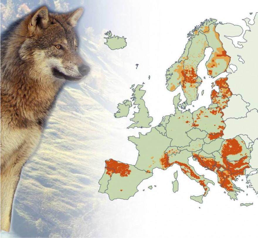 Verbreitung des Wolfes in Europa (Grafik: ec.europa.eu)